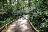 Wooden path through forest — Stock Photo