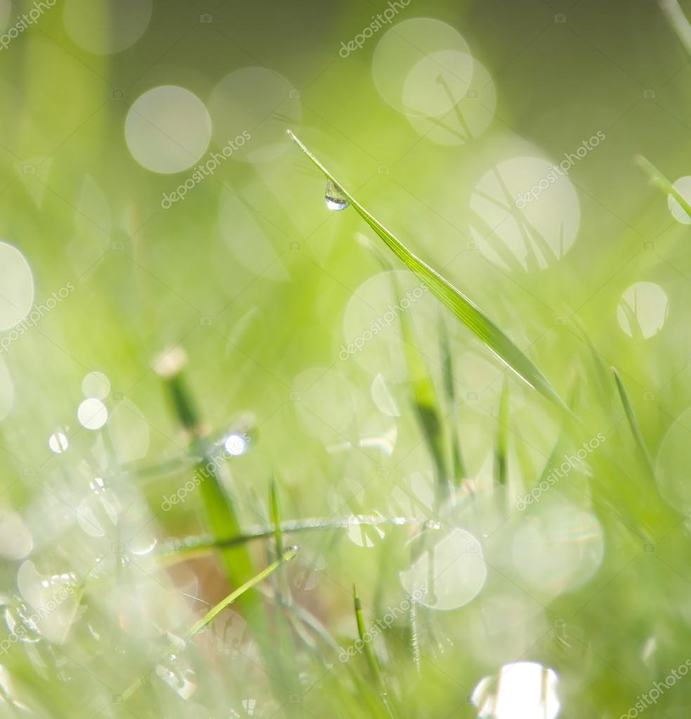 Natural green background with selective focus — Stock Photo #14040645