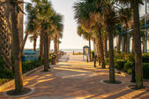 Palm tree alley at myrtle beach — Stock Photo