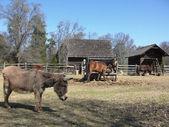 Animals on the farm — Stock Photo