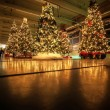 Stock Photo: Decorated christmas trees