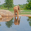 Elephant reflection — Stock Photo