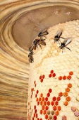 ミツバチの巣箱 — ストック写真