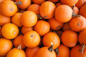 Pumpkins on pumpkin patch — Stock Photo
