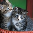 Two cute kittens in basket — Stock Photo