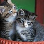 Two cute kittens in basket — Stock Photo