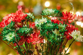 Colored daisy flowers with christmas lights in back — Stock Photo