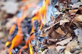 Leaves burning hazard — Stock Photo