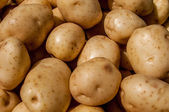 Close up of big white potatoes on market stand — Stock Photo