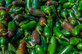 A large group of pretty Jalapeno peppers — Stock Photo