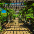Stock Photo: Garden Lattice walkway with stone pavers and vine flowers throug