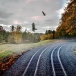 Stock Photo: Foggy nature along train tracks