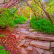 Craggy Garden Trail — Stock Photo