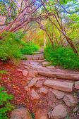 Craggy Garden Trail — Stock Photo