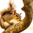Stock Photo: Curious squirrel