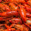 Steamed crawfish — Stock Photo