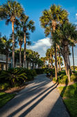 Florida beach scene — Stok fotoğraf