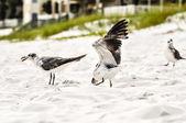 Möwen am strand sand — Stockfoto