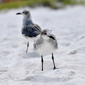 Seagulls on beach sand — Stock Photo