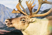 Reindeer profile — Stock Photo