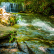 Nature around a small creek in the forest woods — Stock Photo