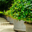 Green plants in pots on city street — Stock Photo