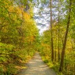 Beautiful autumn forest mountain stair path at sunset — Stock Photo