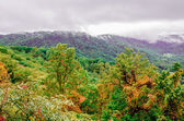 Mountain landscapes in virginia state around roanoke — Photo