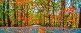 Herfst landweg — Stockfoto