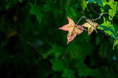 Yellow leaf on a green background — Stock Photo