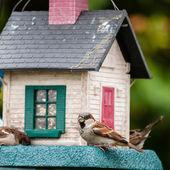 Bird feeders. tree house for the birds, — Stock Photo