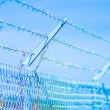 Stock Photo: Barb wire fence
