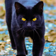 Black cat with glowing yellow eyes — Stock Photo