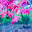 Autumn season colors — Stock Photo
