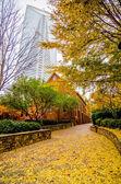 Charlotte city skyline autumn season — Stock Photo