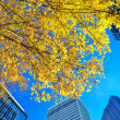 Looking up at tall skyscrapers during fall season — Stock Photo #37878383