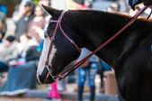 Portrait of a beautiful horse — Stock Photo