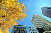 Looking up at tall skyscrapers during fall season — Stock Photo