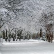 Snow covered road and trees after winter storm — Stock Photo #43353089
