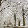 Snow covered road and trees after winter storm — Stock Photo #43353759