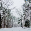 Snow covered road and trees after winter storm — Stock Photo #43354027