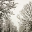 Snow covered road and trees after winter storm — Stock Photo #43354231