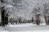 Snow covered road and trees after winter storm — Stock Photo