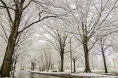 Snow covered road and trees after winter storm — Foto Stock