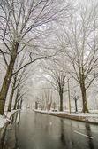 Karla kaplı yol ve sonra kış fırtına ağaçları — Stok fotoğraf