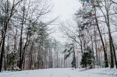 Snow covered road and trees after winter storm — Стоковое фото