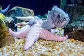 Tuin van koraal net onder het wateroppervlak — Zdjęcie stockowe