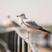 Seagull standing on rail — Stock Photo