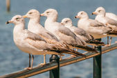 Seagull standing on rail — Stock Photo