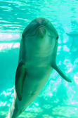 Dolphin posing for a camera closeup — Stock fotografie